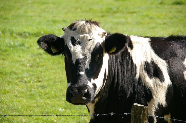 Success, Confidence, & Serotonin (or: Cool Things You Never Knew About Cows)